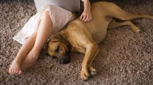 6 Inspiring Pets Who Saved Their Owners