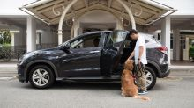 Grab launches service for passengers to ride with their pets