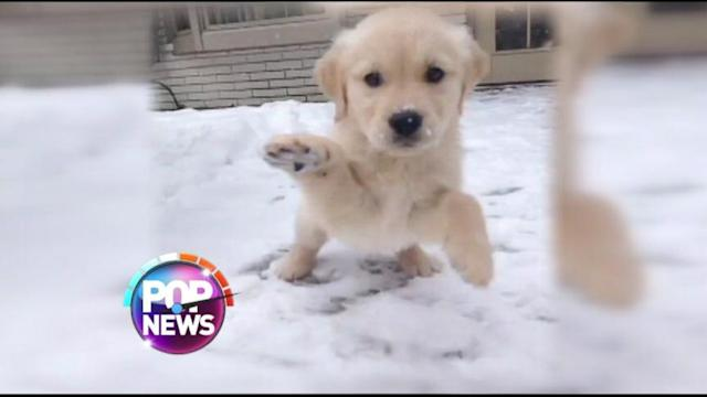 Puppy Plays in Snow for First Time