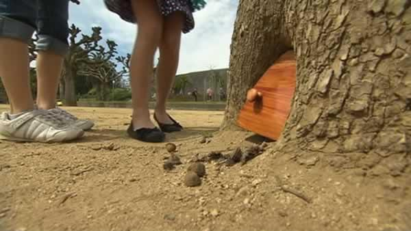 Crowds drawn to small door in tree at SF's GG Park