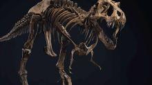 Stan, um dos esqueletos mais completos de T-rex, é oferecido em leilão