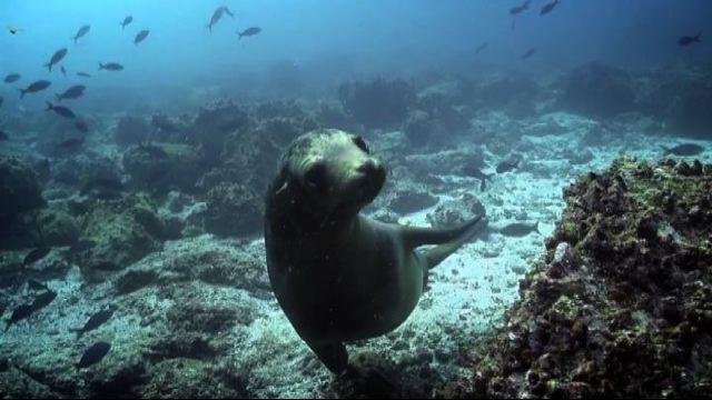 Google Street View sbarca nell'arcipelago delle Galapagos