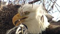 Real-Life Angry Birds Fight Over Territory