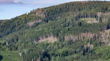 """Sécheresse : """"Des forêts commencent à mourir"""" en France, alerte une hydroclimatologue"""