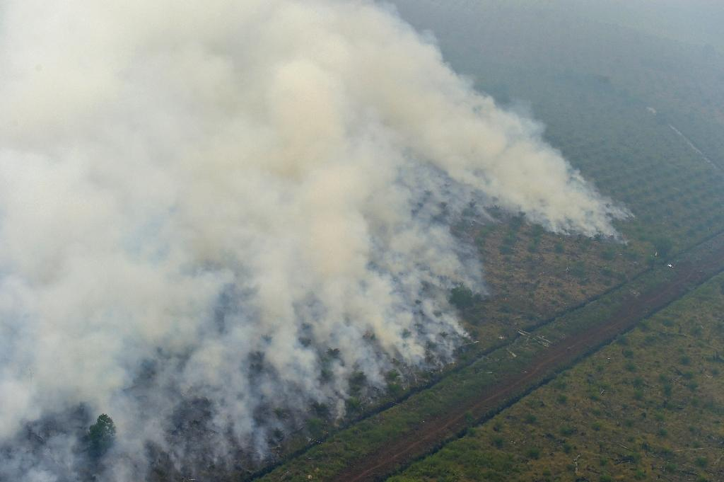 Indonesia is punishing more than 20 companies in an unprecedented move for starting deadly forest fires that killed 19 people, a government official said on December 22 (AFP Photo/Adek Berry)
