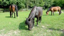 Corona-Krise: Ponyclub mit Geldsorgen startet Spendenaktion