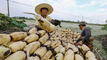 【基金解碼】水耕農業要突圍 港府須有政策支持