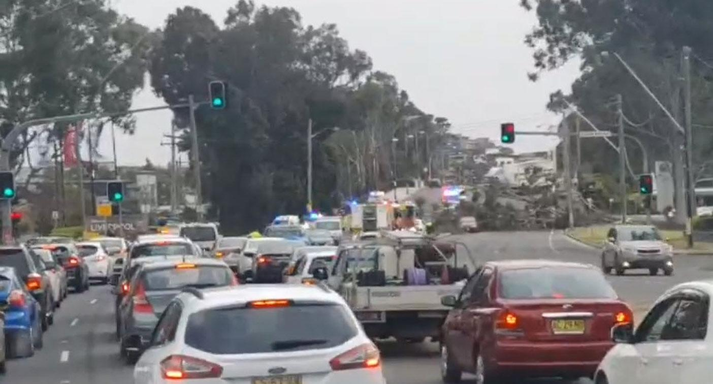 Flipboard Cars Trapped By Falling Tree As Extreme Winds