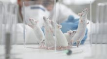 La ciencia logra que nazcan crías de ratón a partir de dos hembras