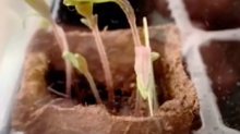 Woman's simple trick brings wilted Discovery Garden plant back to life