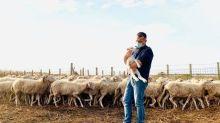 """Il pastore ha il covid, il sindaco va ad accudirgli le pecore: """"Mi ha chiesto aiuto. Vado dove c'è bisogno"""""""