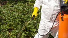 Los pesticidas y sus efectos: estudio con ratones revela cambios metabólicos