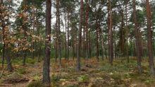 """""""C'est un petit peu désolant quand même"""" : victime de la moindre étincelle, la forêt de Fontainebleau a déjà son aspect automnal"""