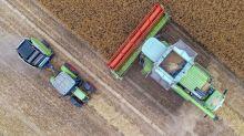 Potsdam: Bauern schlagen Alarm: Brandenburger Getreide vertrocknet