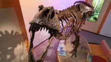 Scotty goes to Scotland: Replica of world's largest T. Rex, discovered in Sask., part of touring exhibit