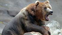 Bear scare: How to protect yourself from attack