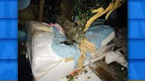 NY Woman Survives After Tree Smashes Through Home
