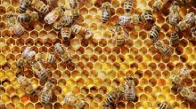 Heilende Hautpflege oder toxisches Mittel? Das musst du über Kosmetik mit Bienengift wissen