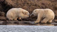 Distressing photos of polar bears show dark reality behind plastic pollution