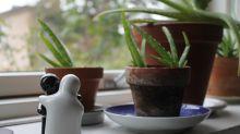 Conheça dez plantas que ajudam a combater gripe e insônia, segundo a NASA