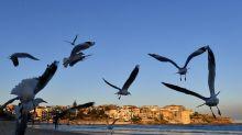 Tiny plastic trash killing seabirds: study