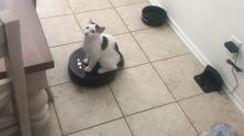 Cat glides around the house on his owner's Roomba