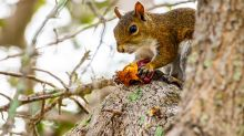 Man Dies from Extremely Rare Disease After Eating Squirrel Brains
