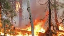 Strawberry Fire Torches Over 40 Acres of Forest in Kane County