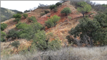 Silver Spruce Mobilizes Phase 1 Exploration on Jackie Au-Ag Property, Sonora, Mexico