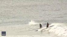 Dolphins Leap Alongside Surfers in Australia's Byron Bay