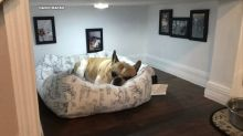 Florida man builds tiny bedroom for his dog under the stairs