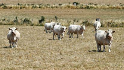 Sécheresse: le gouvernement sonne la mobilisation pour aider les agriculteurs