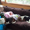 These Loyal Family Dogs Refuse To Leave Dying Toddler's Side