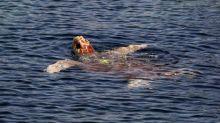 Fréjus: une tortue marine vient pondre ses œufs sur une plage publique