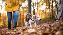 Dog walkers 78% more likely to catch coronavirus in first lockdown, study suggests