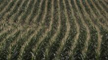 U.S. farmers running out of opportunities to sell corn at profit