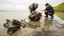 Mammoth skeleton found in Siberian lake