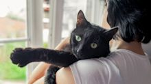 """""""No evidence"""" to support crazy cat lady stereotype, study finds"""