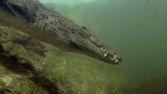 Never-Before-Seen Underwater Croc Dens