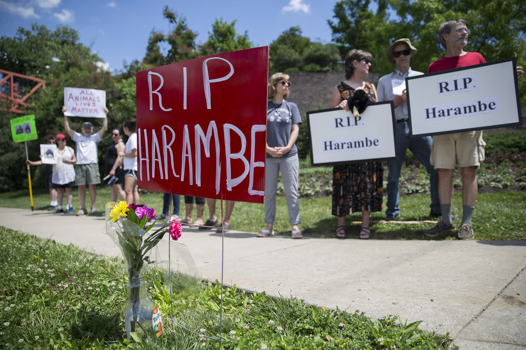 <p>Animal rights activists and mourners gather for a Memorial Day vigil outside the Cincinnati Zoo & Botanical Garden, Monday, May 30, 2016 in Cincinnati for Harambe, the gorilla killed Saturday at the Cincinnati Zoo after a 4-year-old boy slipped into an exhibit and a special zoo response team concluded his life was in danger. There has been an outpouring on social media of people upset about the killing of the member of an endangered species. (AP Photo/John Minchillo) </p>