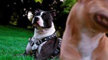 Affaire Pilarski: Curtis, le chien de la victime, aurait tué sa maîtresse