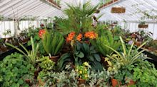 How even a small greenhouse can be a winter haven for plants