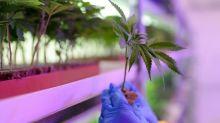"""Cannabis: un rapport parlementaire prône une """"légalisation régulée"""""""
