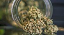 La marijuana legale si compra online. Quella light arriva a casa in forma anonima