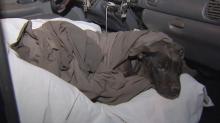 Magic, el perro de 16 años que sobrevivió dos días bajo los escombros