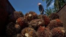Malaysian palm oil giant hit with US ban over abuse concerns