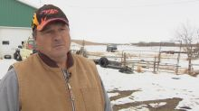 Down in the dumps: Alberta landowner has spent decades surrounded by gulls and garbage