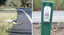 How these roadside posts may save the lives of thousands of animals