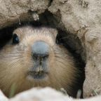 City in China's Inner Mongolia warns after suspected bubonic plague case and tells people to report sick marmots