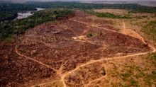 Amazon deforestation is driven by criminal networks, report finds